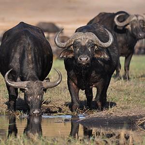 hunting-zimbabwe